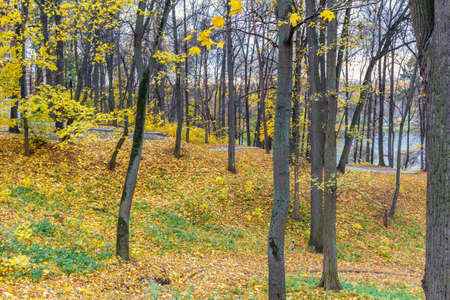Hillside in city park strewn with yellow leaves. Nature landscape in autumn day