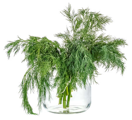 Bunch of dill in glass jar with water isolated on white background