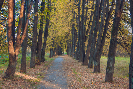 A walk in the autumn woods. Golden autumn. The colorful trees. Wildlife of Siberia.