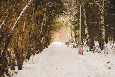 Footpath in pine winter wood. Wildlife of Siberia. Stock Photo