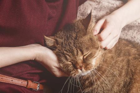 Woman caress tabby cat, hand of woman caress beautiful half sleepy kitten, Sleepy cat