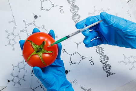 GMO Scientist Injecting Green Liquid from Syringe into Red Tomato - Genetically Modified Food Concept.
