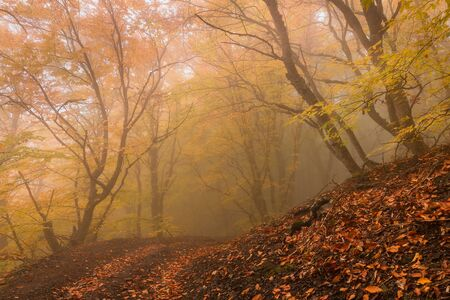 Beautiful foggy autumn forest landscape with fallen leaves Stock Photo