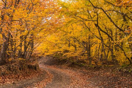 Beautiful autumn forest landscape with pathway