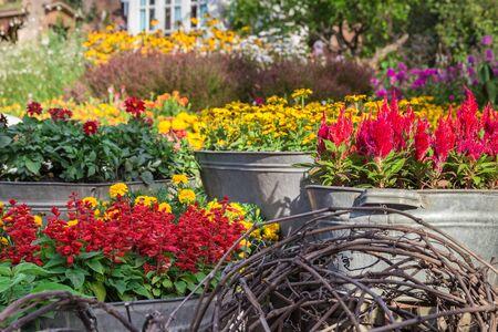 Vivid summer flowers in a flowerpots (galvanized trough)