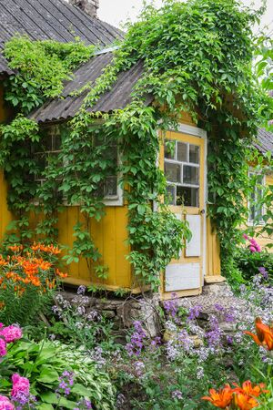 Entrance to the old rustic yellow house decorated parthenocissus and garden flowers. Russia Stock Photo