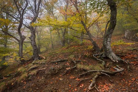 Autumn forest landscape with fallen leaves