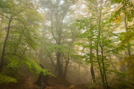 Misty  forest with fog in the autumn