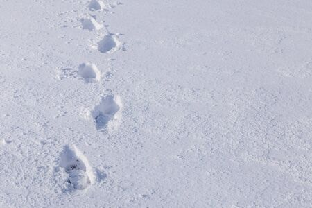 Line of mans footsteps in the snow Stok Fotoğraf