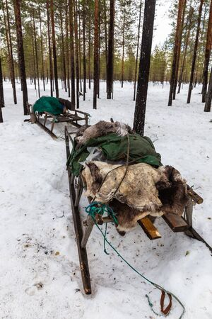 Nenets sleigh for reindeer harness near reindeer herder camp in winter. Arkhangelsk region, Russia