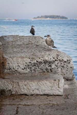 Seagulls are sitting on a concrete pier in the city of Rovinj. Adriatic Sea. Croatia