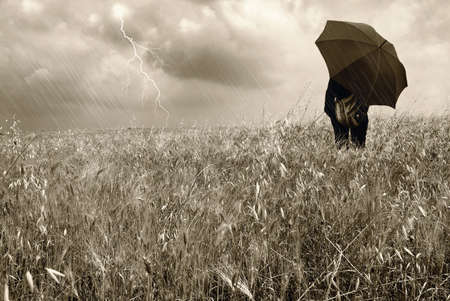 umbrella rain: woman into a cornfield under the rain