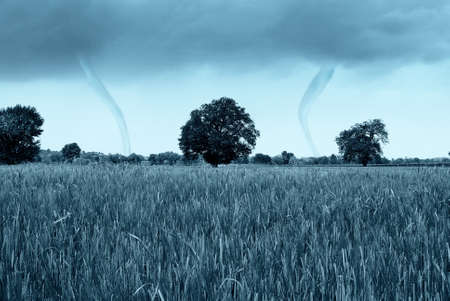 a tornado is coming from the cornfield photo