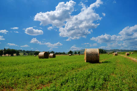 bales of oat in flat land in summer Stock Photo - 8285595