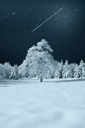 isolated tree covered by the snow