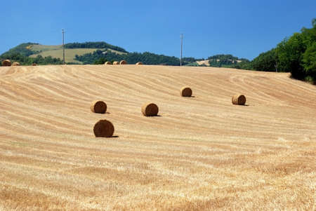 5 bales of hay on the hill Stock Photo - 8392178