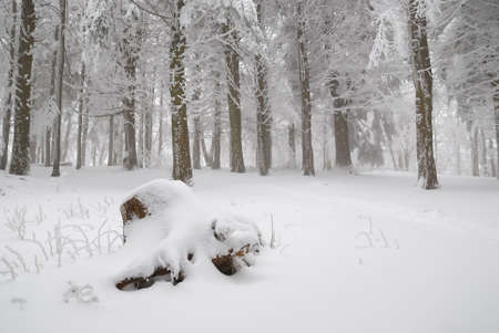 Forest covered with white snow photo