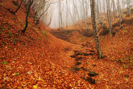 Red autumn underwood into the  forest in autumn with fog photo