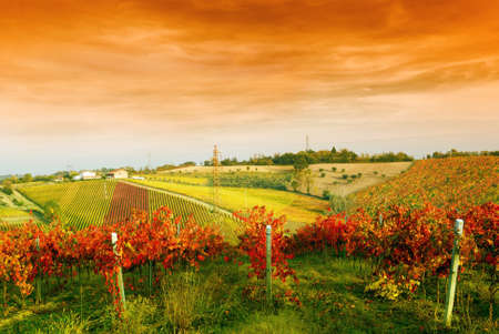 red sky over the vineyard in autumn photo