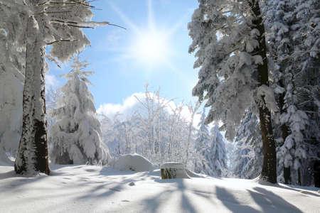 bosque con nieve: Underwood cubierto por la nieve