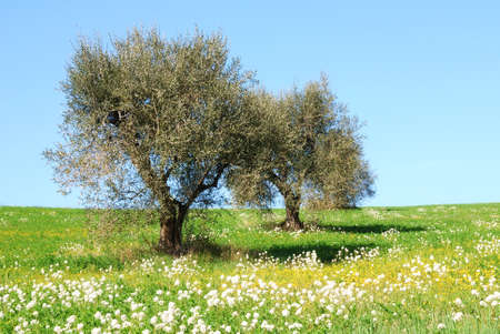 Olive flowers on flowery meadow photo