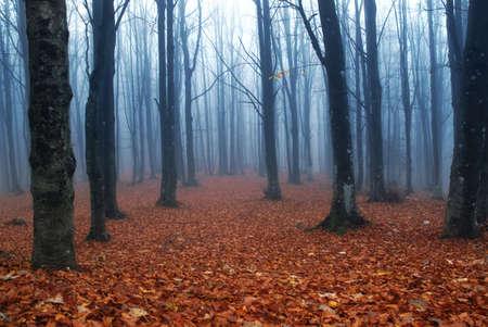 cascades: mystieke underwood met rode bladeren