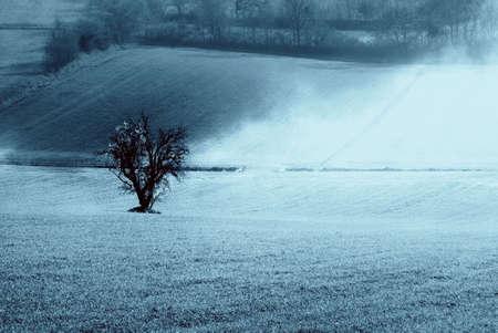 int: isolated cherry tree int he fog Stock Photo