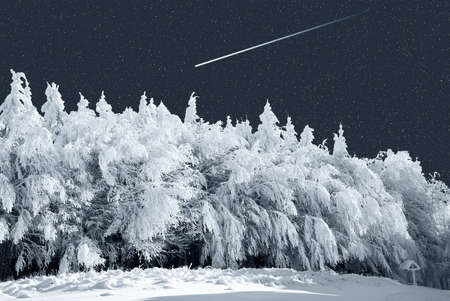 winter forest in the night Stock Photo - 9060770