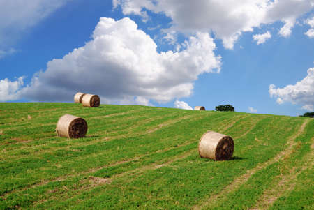 bales of hay on the slope in spring photo