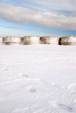 bale of hay covered by snow Stock Photo - 9140754