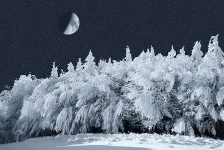 moon over the winter forest Stock Photo - 9168119
