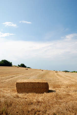 bale of oat isolated on the slope photo