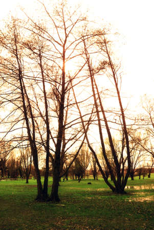 trees at the sunset in the park photo