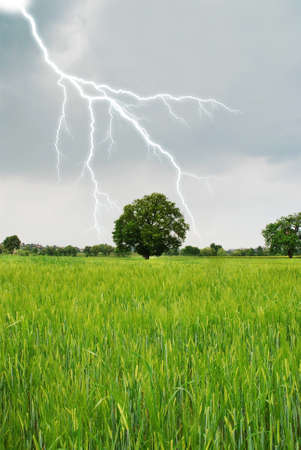 lightning in spring on a grain field Stock Photo - 9241421