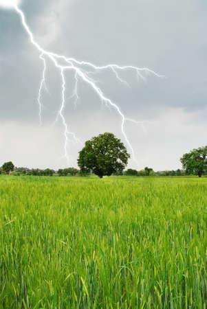 lightning in spring on a grain field photo