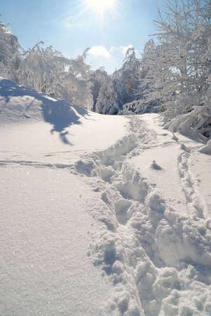 path through the snow under a blue sky Stock Photo - 9241447