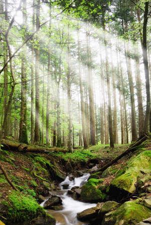 cascades: un raggio di sole attraverso i boschi
