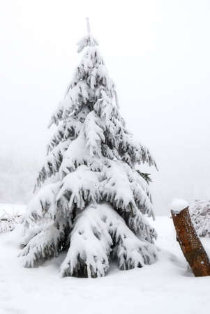 snow-covered tree shrouded in fog photo