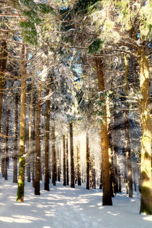 illuminated forest by ray of sun Stock Photo - 9283910