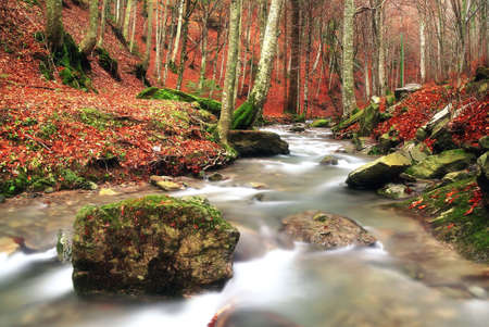 isolated rock into the stream in autumn photo