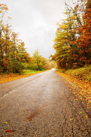 road through the woods in autumn photo