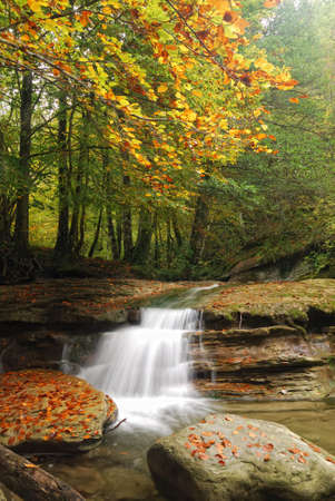 little waterfall under tree in autumn photo