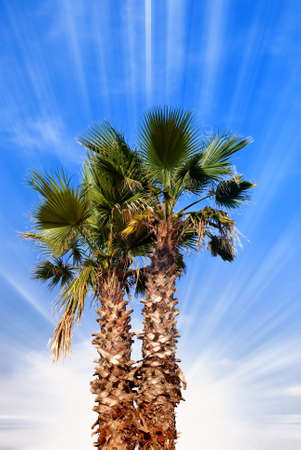 palm in summer under cool sky Stock Photo - 9431132
