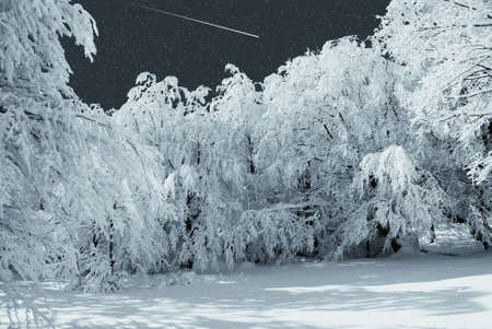 falling star on the snowy forest photo
