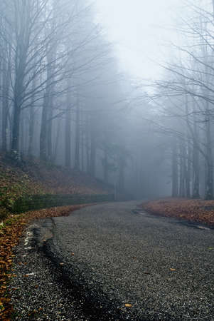 street with fog in the forest Stock Photo - 9530727