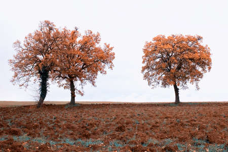 isolated trees in autumn in countryside Stock Photo - 9530735