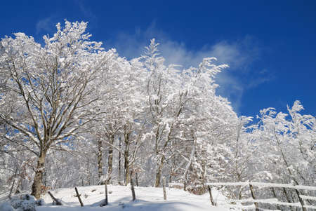 trees and lawns covered with icy snow Stock Photo - 9575508