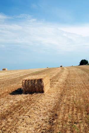 isolated rectangular bales of hay photo