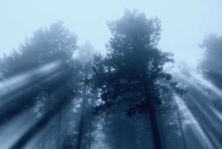 ray of sunlight between the trees in fog Stock Photo - 9892701