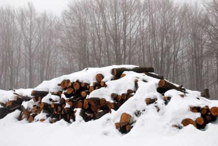 wood under the snow in the park photo